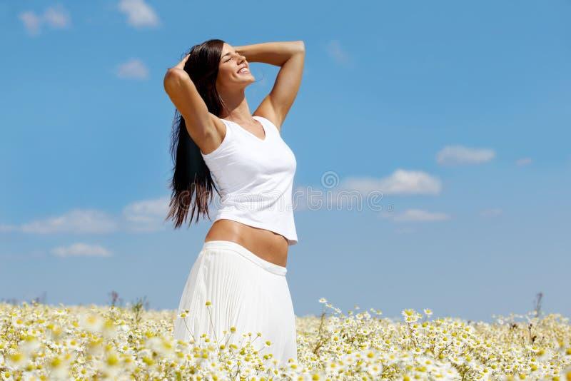 chamomile πεδίο στοκ εικόνες