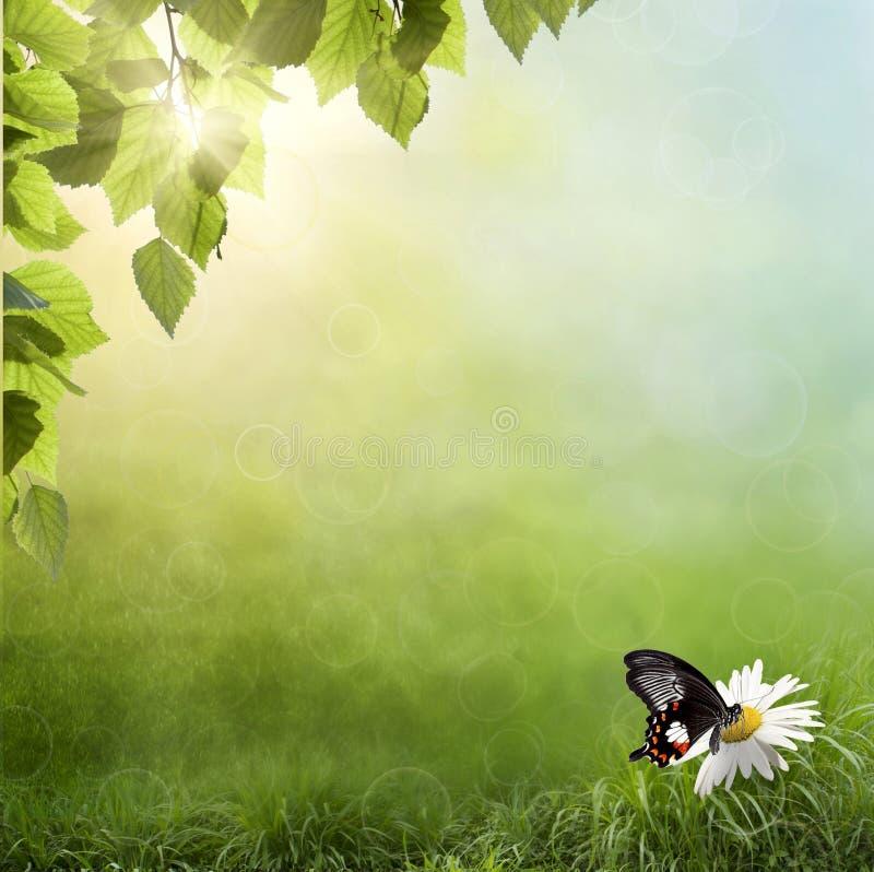 chamomile χλόη λουλουδιών ελεύθερη απεικόνιση δικαιώματος