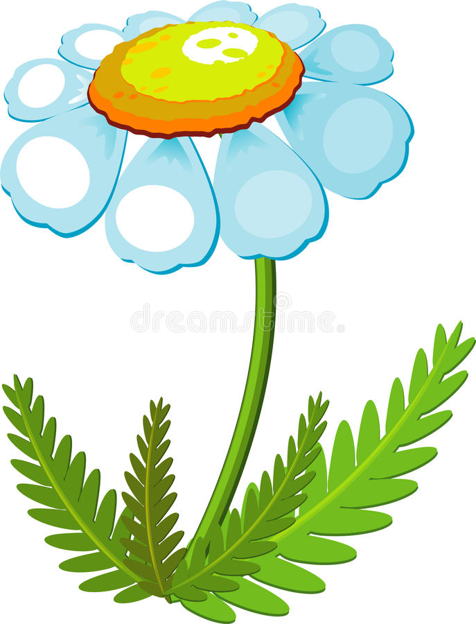 Download Chamomile stock vector. Image of illustration, plant - 13539436