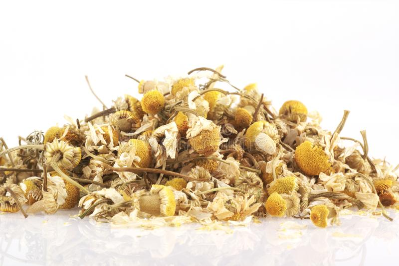 Chamomile.. stock photography