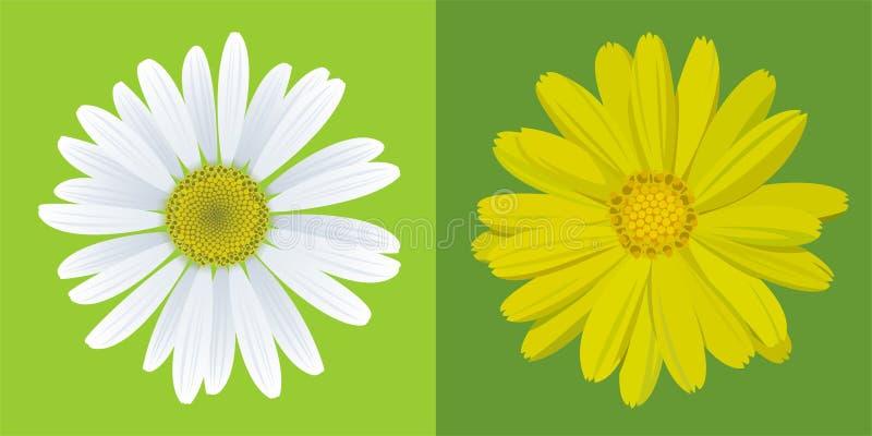 Chamomile&marigold stock illustratie