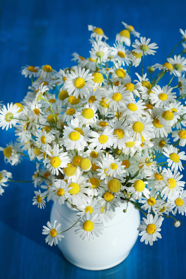 Chamomile bouquet stock photo