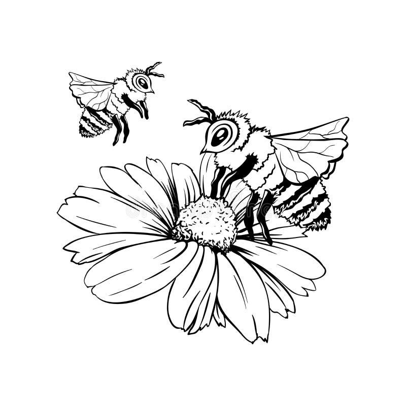 Pollination Process Hand Drawn Sketch Stock Vector