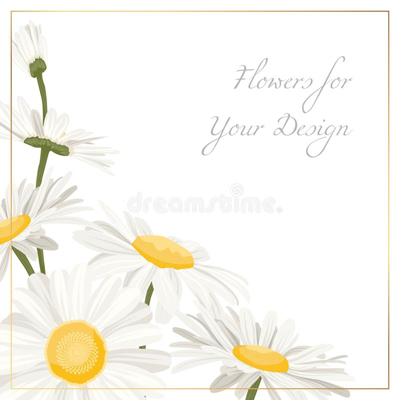 Chamomile daisy flowers herbs bouquet isolated. On white background. Floral corner composition decoration with camomiles. White yellow spring summer flowers stock illustration