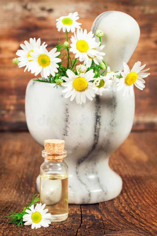 Chamomile essential oil stock image