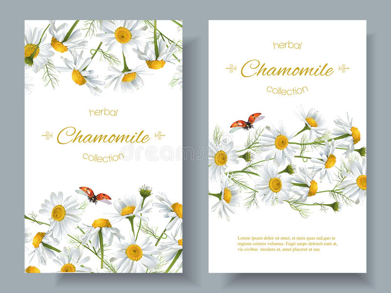 Chamomile flower banners. Vector chamomile flower banners with ladybug. Design for herbal tea, natural cosmetics, health care products, aromatherapy, homeopathy stock illustration