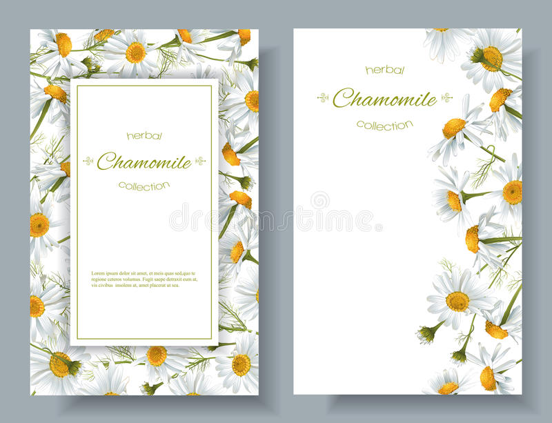 Chamomile flower banners. Vector chamomile vertical banners. Design for tea, natural cosmetics, beauty store, health care products, perfume, essential oil vector illustration