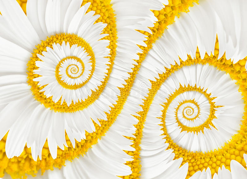 Chamomile flower infinity spiral stock photos