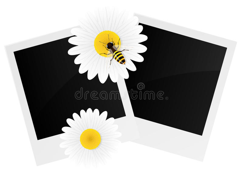 Chamomile flower and photo frame. vector illustration