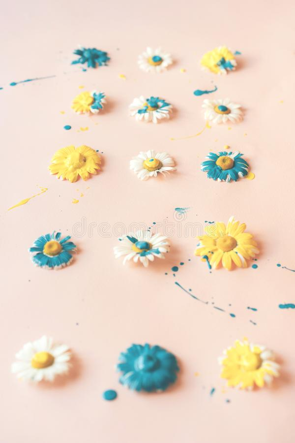 Chamomile flowers with dripping blue and yellow paint stock photography