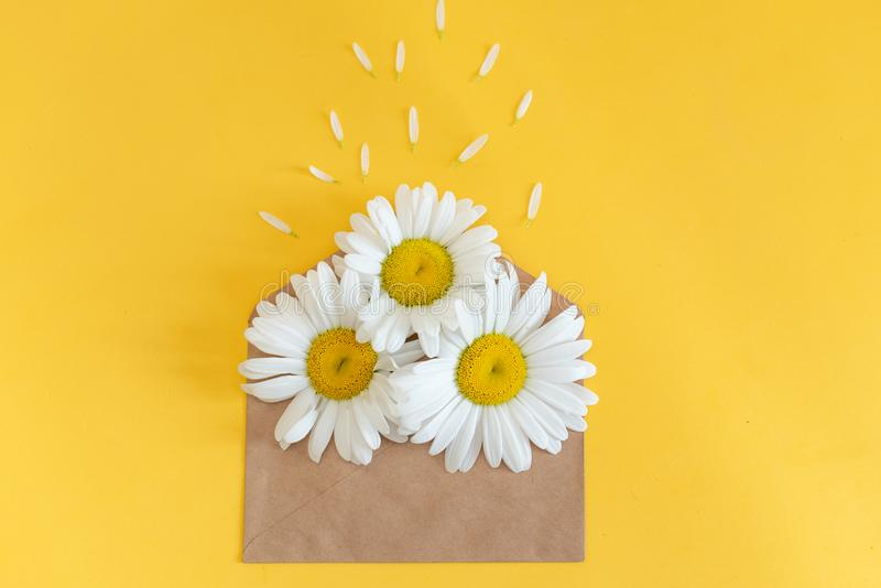 Chamomile flowers in envelope on colorful background. Daisy blooms pink yellow paper.  royalty free stock photography