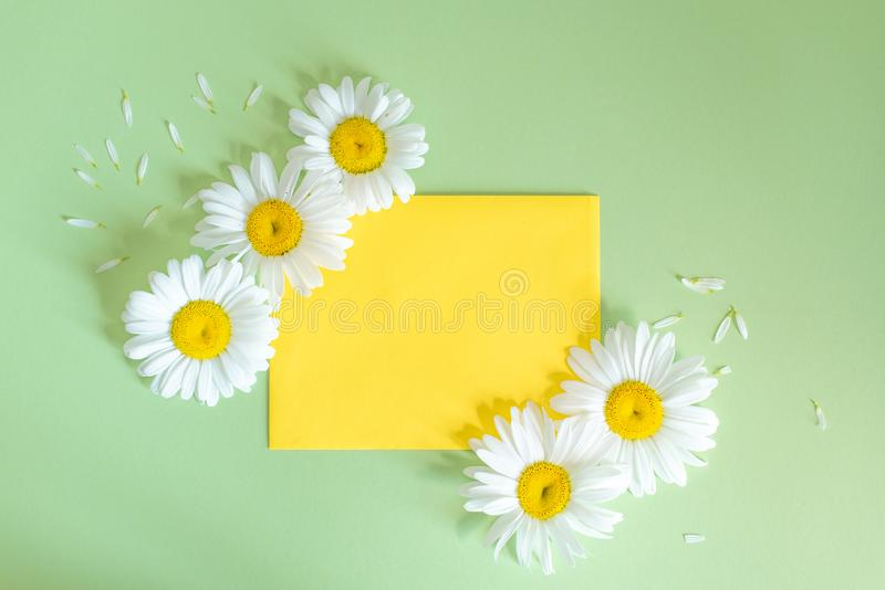 Chamomile flowers in envelope on colorful background. Daisy blooms pink yellow paper.  royalty free stock images