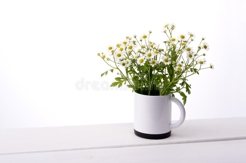 Chamomile kwiat obrazy royalty free