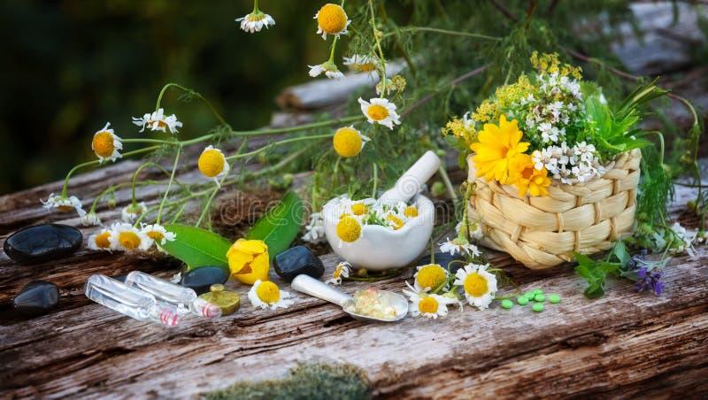 Chamomile, medicinal plants, homeopathy. Chamomile and other medicinal plants for homeopathy stock photos