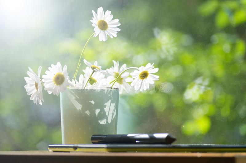 Chamomile, morning, candle, dawn. The concept of a summer morning. A Sunny mood. The morning has come. stock photography