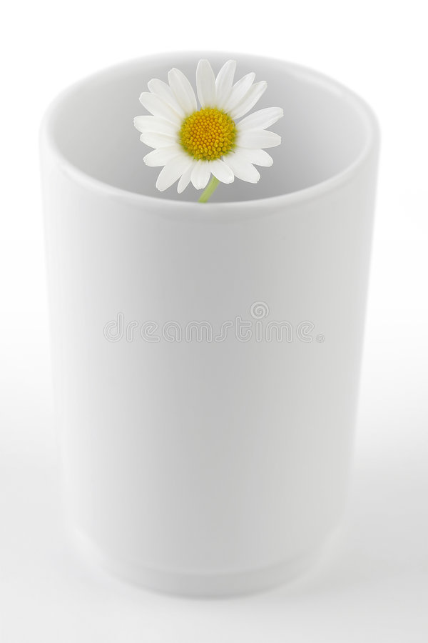Download Chamomile in Mug stock photo. Image of dainty, flowers - 2744234