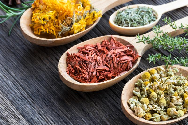 Chamomile, red sandalwood, calendula and horsetail on wooden spoons stock photo