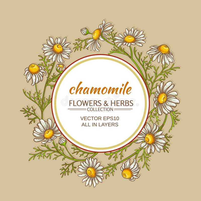 Chamomile vector frame. Chamomile flowers vector frame on color background royalty free illustration