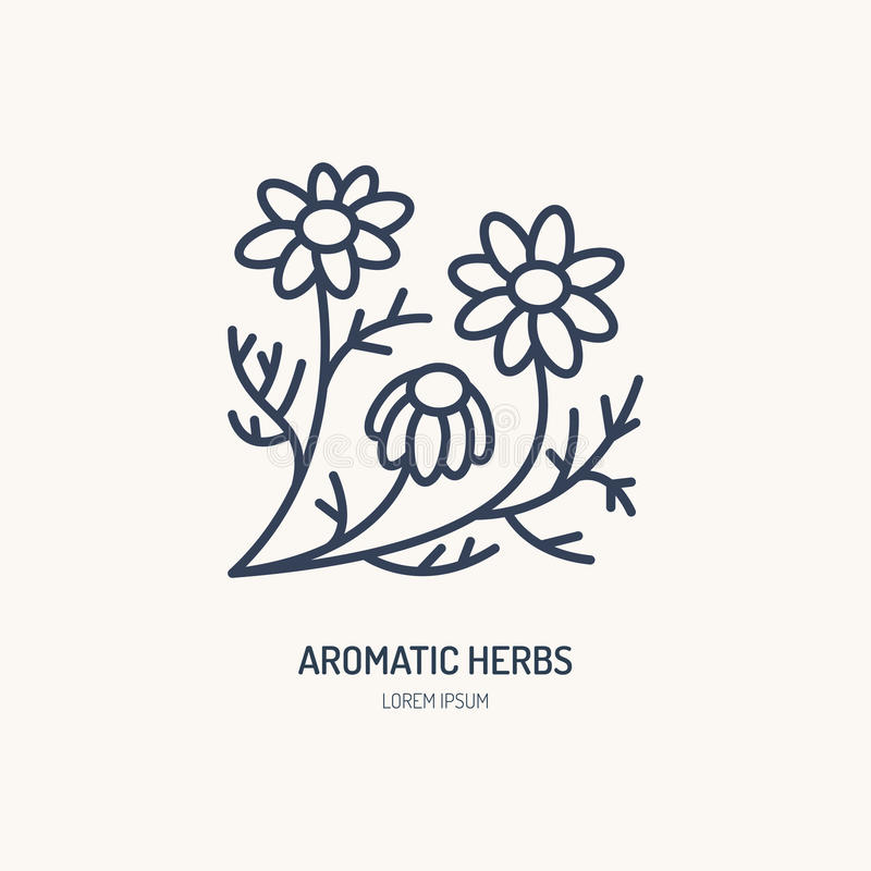 Chamomile vector line icon. Aromatic herbs logo, daisy chain sign. Linear illustration for natural camomile tea.  vector illustration