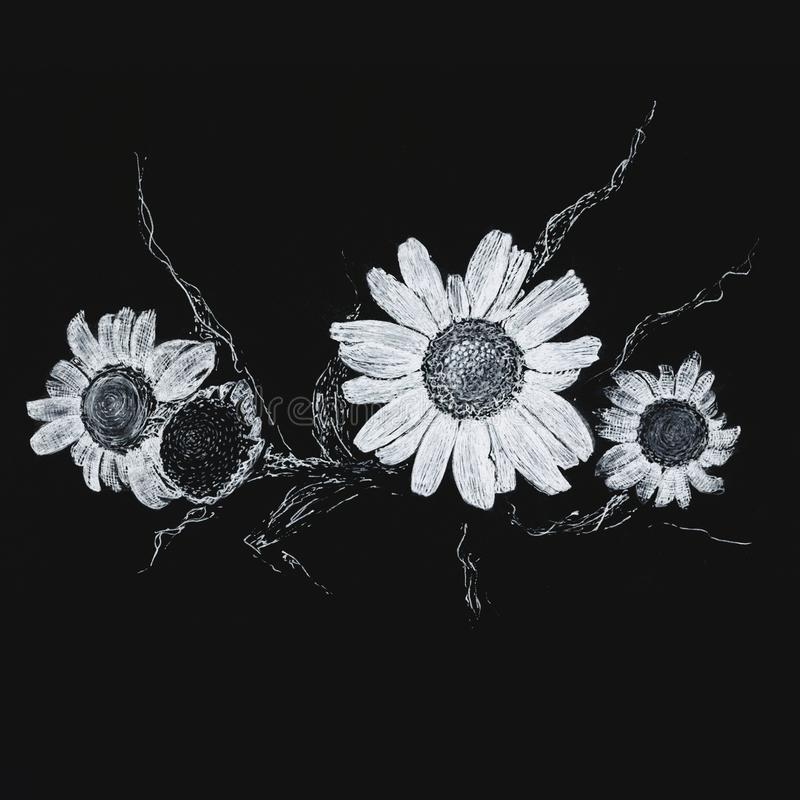 Chamomile in white ink on a black background. stock photos