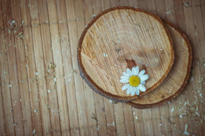 chamomile zbliżenia dof kwiatu macro płycizny strzał obrazy royalty free