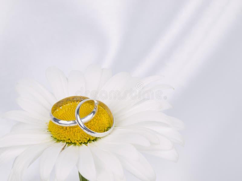 chamomilen ringer två bröllop royaltyfria bilder
