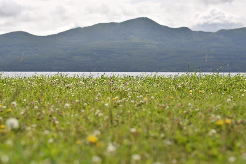 Chamomiles και ηφαίστεια στοκ φωτογραφίες με δικαίωμα ελεύθερης χρήσης