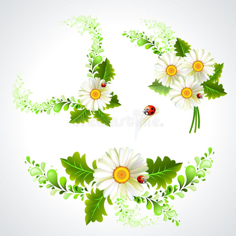 chamomiles ilustracja wektor