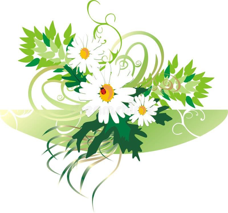chamomiles bukietów ladybird ilustracja wektor