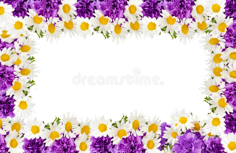 Download Сchamomiles And  Purple Carnation Frame Stock Image - Image: 24541013