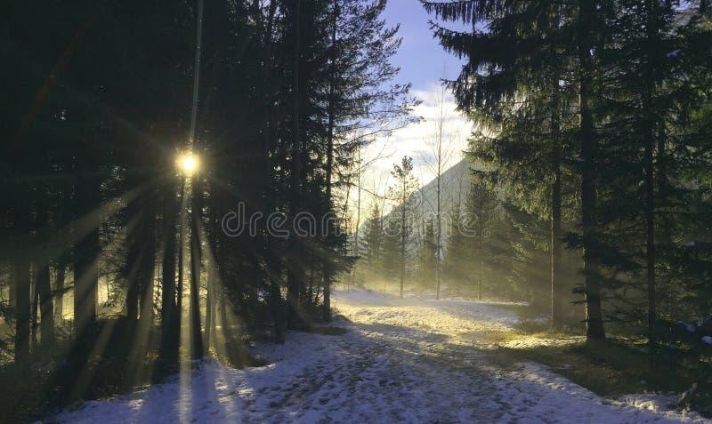 Chamonix zdjęcie royalty free