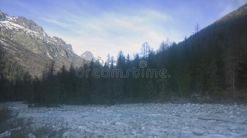 Chamonix Forest. Views of the Alpine forest surrounding chamonix valley royalty free stock photography