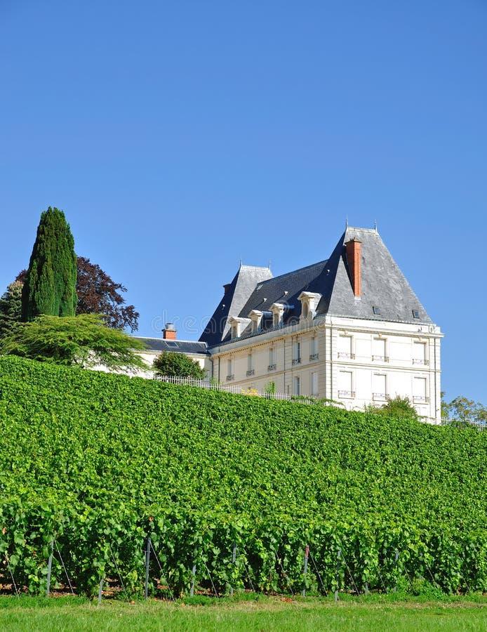 Champán cerca de Epernay, Francia fotografía de archivo