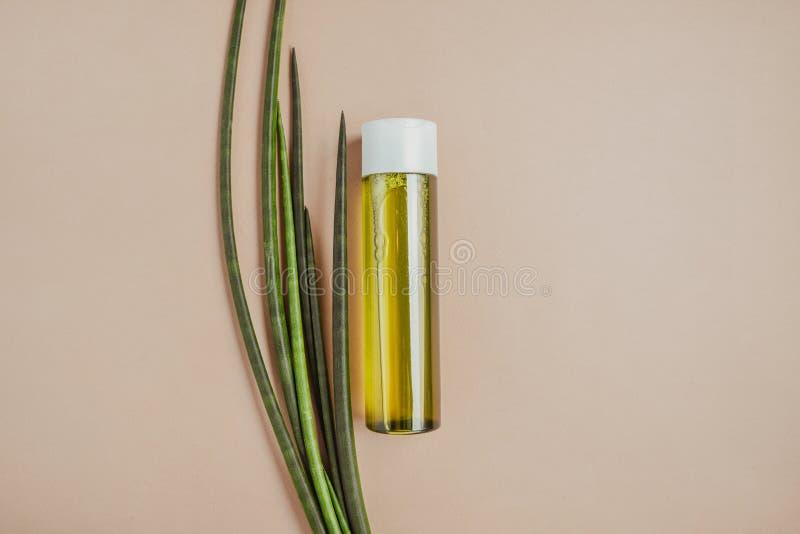 Champô verde do cabelo Cabelo e pele naturais do cuidado Conceito saud?vel do cabelo imagem de stock