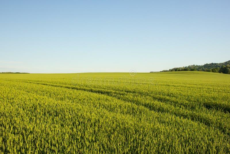 Champ agricole en Croatie images libres de droits