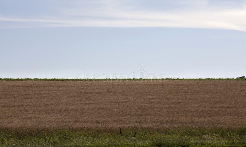 Champ après moisson, paysage d'agriculture photo libre de droits