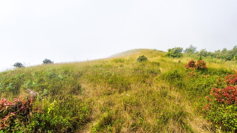 Champ avec brumeux sur la montagne photos libres de droits