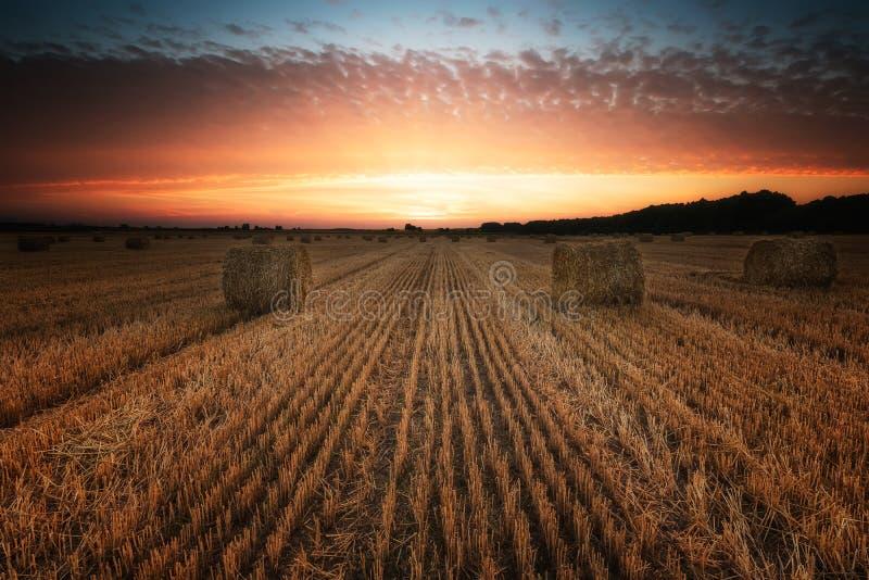 Champ d'été au coucher du soleil photo libre de droits