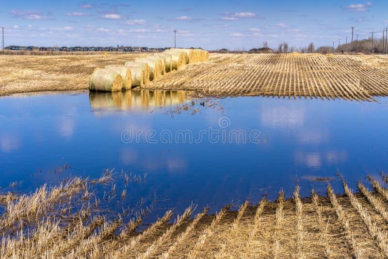 Champ d'agriculture inondé avec de l'eau photo libre de droits