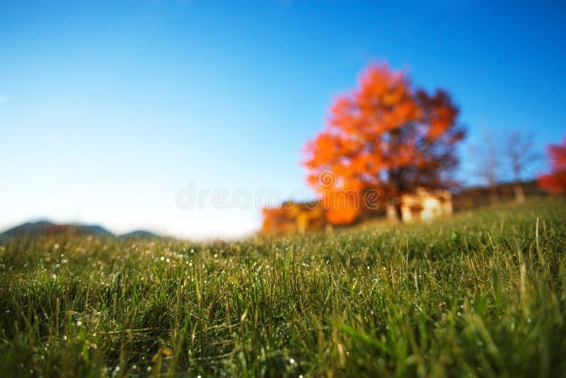 Champ d'automne photo libre de droits