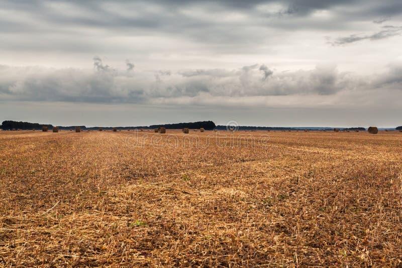 Champ d'automne avec des gerbes de foin et de ciel dramatique image stock