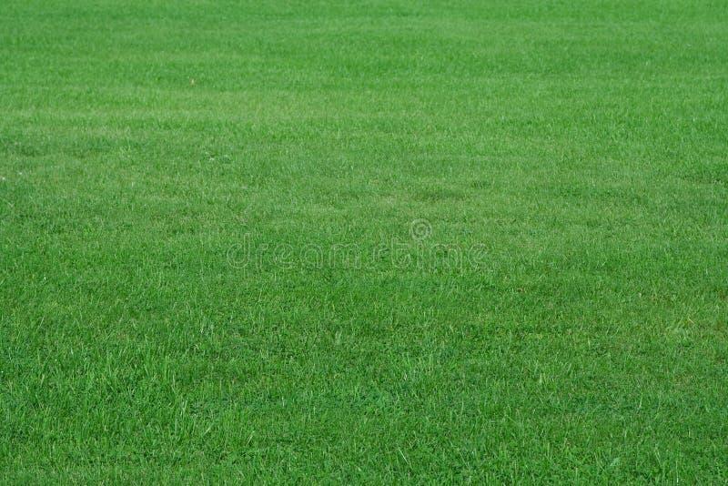 Champ d'herbe d'été images stock
