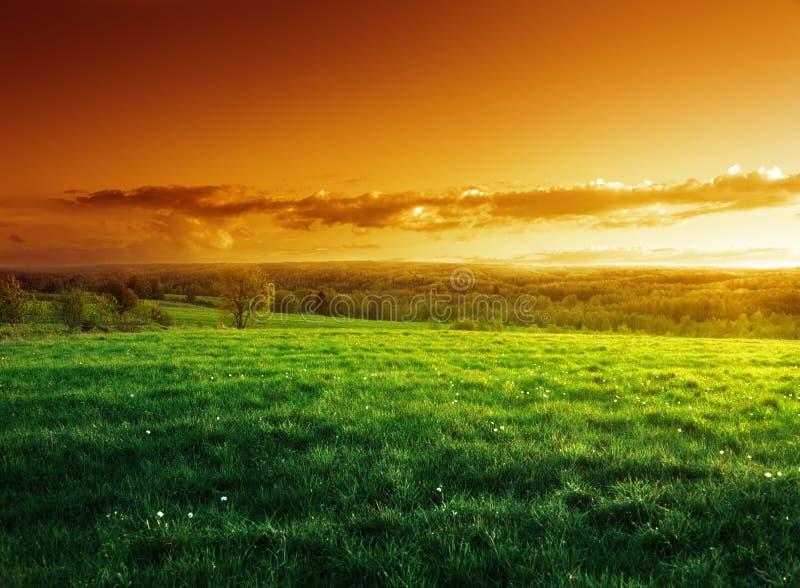 Champ d'herbe de ressort dans le temps de coucher du soleil photos libres de droits