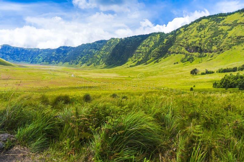 Champ d'herbe de safari photos libres de droits