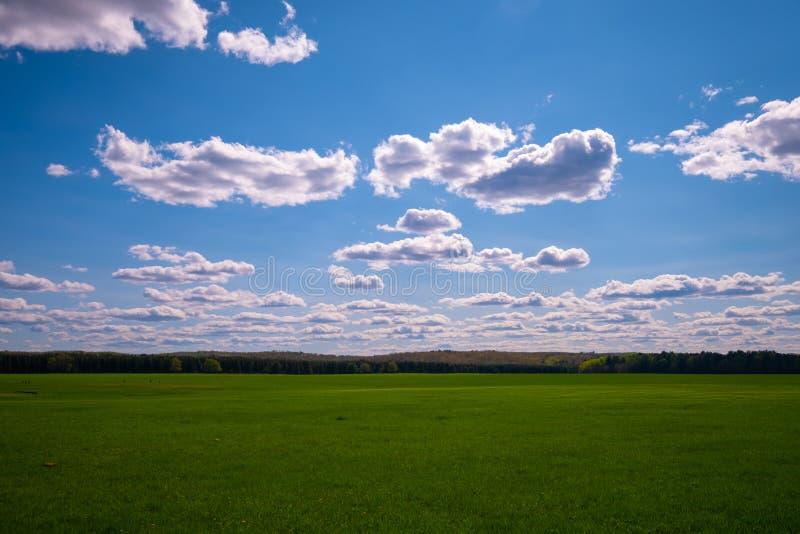 Champ d'herbe verte au-dessous de ciel bleu dans le Wisconsin image stock