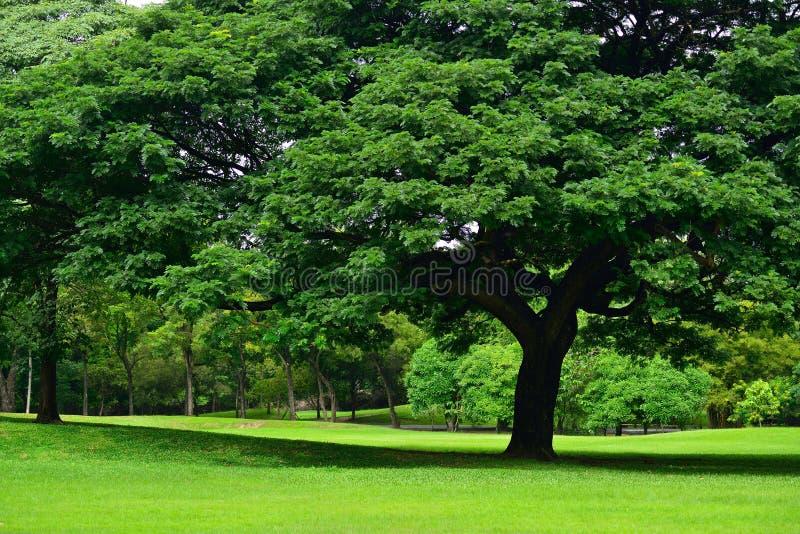 Champ d'herbe verte en parc photo libre de droits