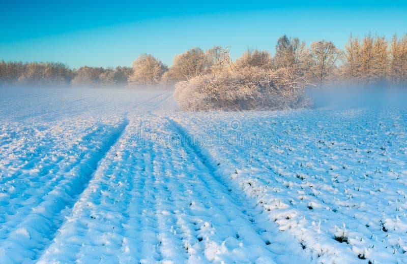 Champ d'hiver au lever de soleil photo libre de droits