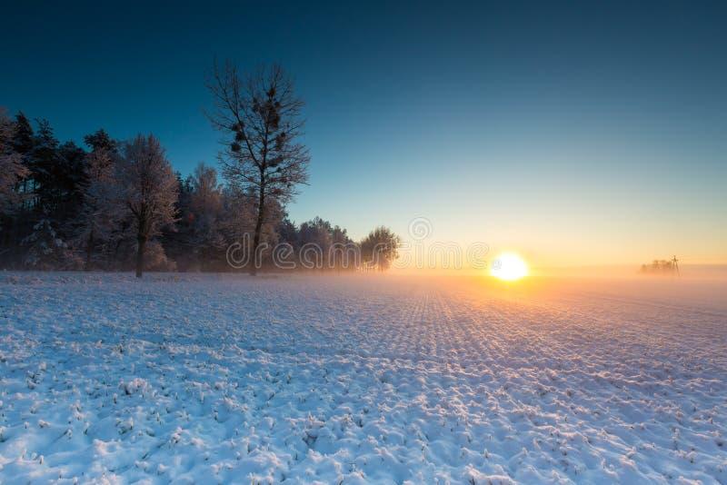 Champ d'hiver au lever de soleil image libre de droits