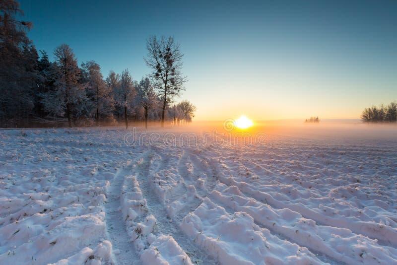 Champ d'hiver au lever de soleil photos libres de droits