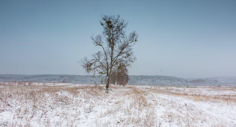 Champ d'hiver sous le ciel gris nuageux images stock